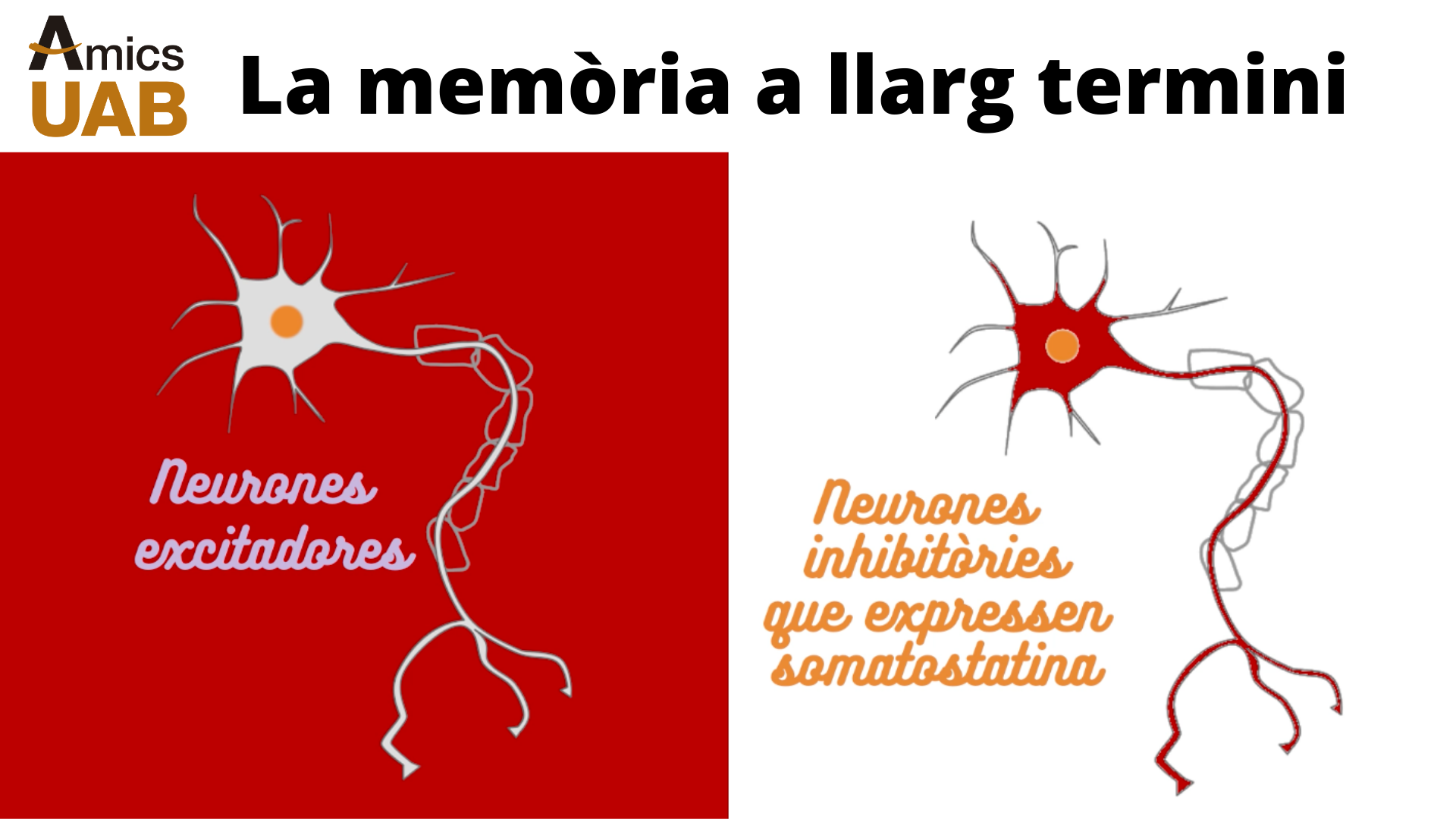 Memoria a llarg termini